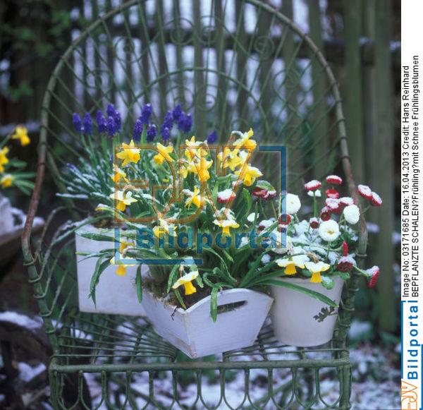 details zu 0003171685 bepflanzte schalen fr hling mit schnee djv bildportal