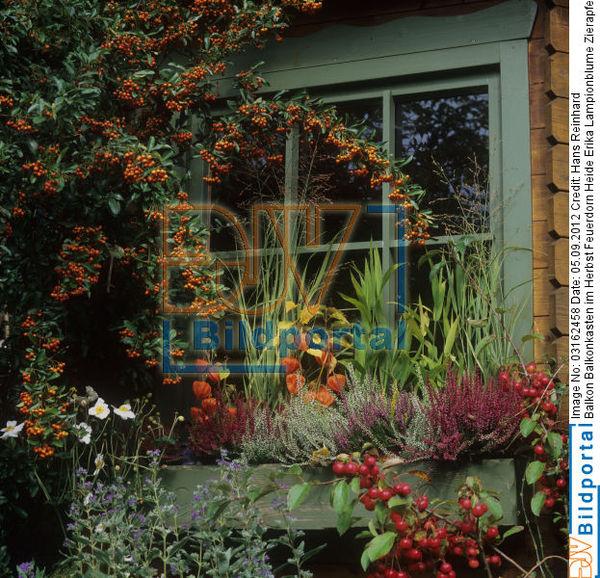 details zu 0003162458 balkon balkonkasten im herbst feuerdorn heide erika lampionblume. Black Bedroom Furniture Sets. Home Design Ideas
