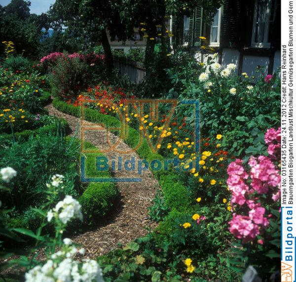 details zu 0003165435 bauerngarten biogarten landlust mischkultur gem segarten blumen und. Black Bedroom Furniture Sets. Home Design Ideas