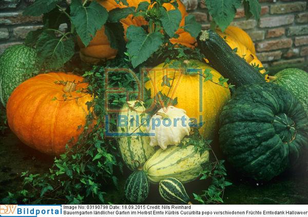 Details Zu 0003190798 Bauerngarten Landlicher Garten Im Herbst