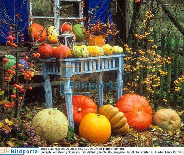 Details Zu 0003190909 Bauerngarten Landlicher Garten Im Herbst
