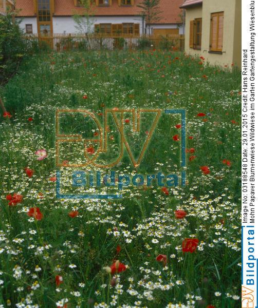 details zu 0003188548 blumenwiese wildwiese im garten gartengestaltung wiesenblumen ges t. Black Bedroom Furniture Sets. Home Design Ideas