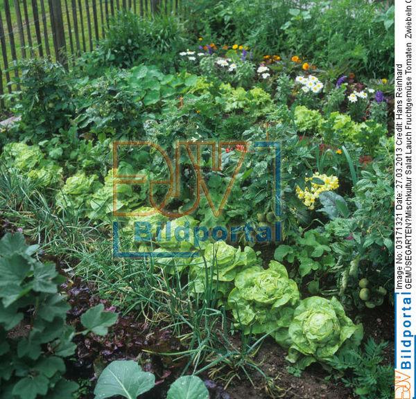 gemusegarten mischkultur – rekem, Garten Ideen