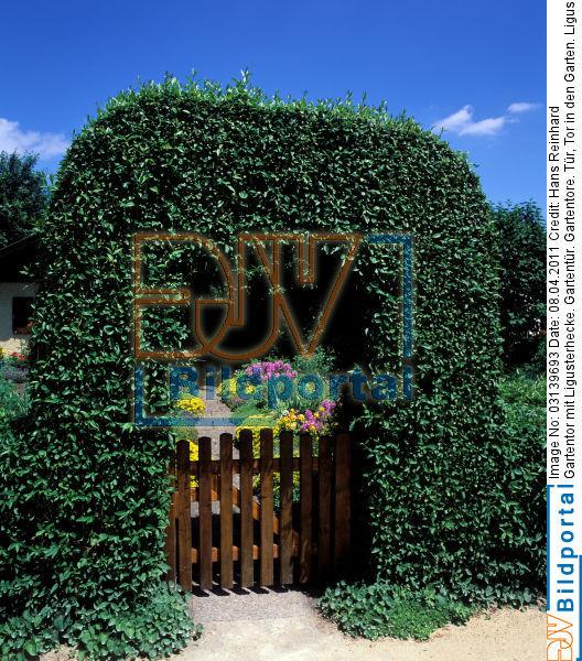 Details zu 0003139693 gartentor mit ligusterhecke djv bildportal - Gartentor mit bogen ...