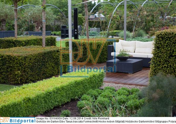 details zu 0003184909 geh lze im garten eibe taxus baccata formschnitt hecke neben sitzplatz. Black Bedroom Furniture Sets. Home Design Ideas