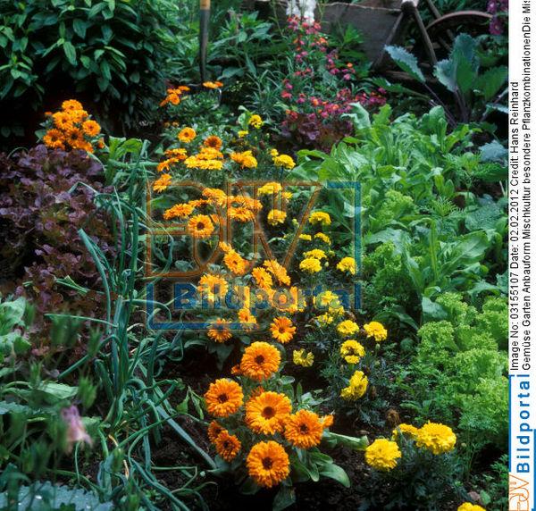 details zu #0003155107 - gemüse garten anbauform mischkultur - djv, Garten Ideen