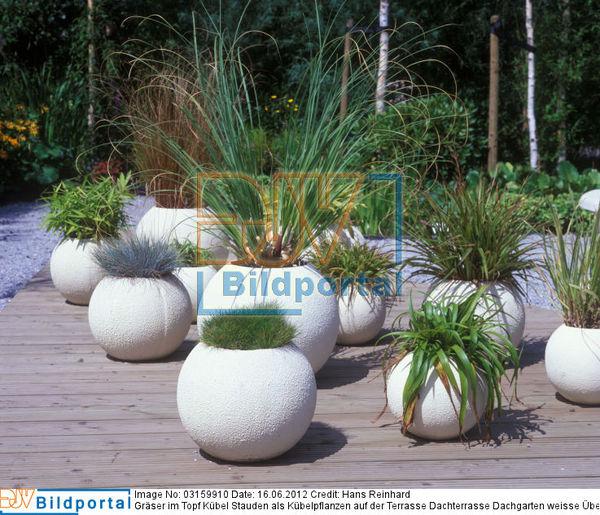 details zu 0003159910 gr ser im topf k bel stauden als k belpflanzen auf der terrasse. Black Bedroom Furniture Sets. Home Design Ideas