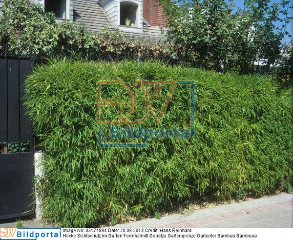 Details zu 0003174884 hecke sichtschutz im garten formschnitt geh lze gartengrenze gartentor - Gartentor sichtschutz ...