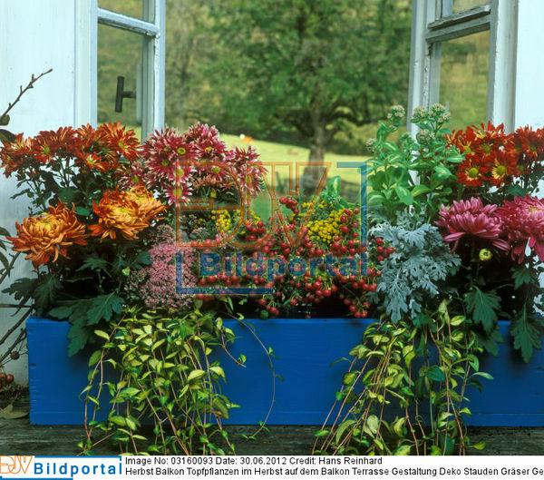 Details zu 0003160093 herbst balkon topfpflanzen im for Deko topfpflanzen