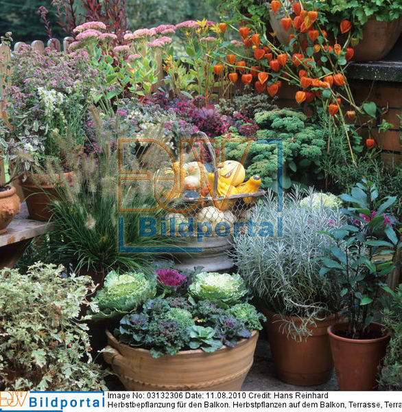 Beaufiful Herbstbepflanzung Balkon Pictures Bloom S Album
