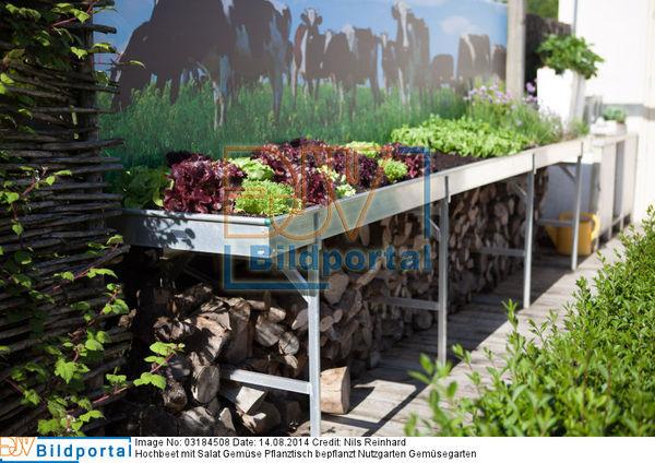 Details Zu 0003184508 Hochbeet Mit Salat Gemuse Pflanztisch