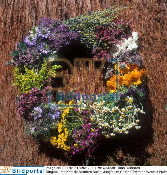 details zu #0003178173 - kräuter heilpflanzen duftpflanzen strauß, Terrassen ideen