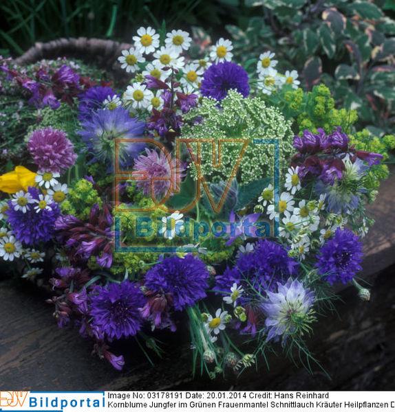 Duftpflanzen Im Garten Blumen Krauter ? Sarakane.info Duftpflanzen Im Garten Blumen Krauter