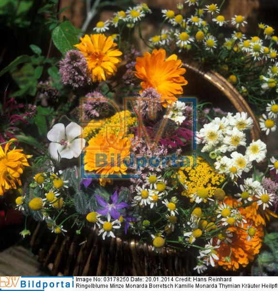 Kräuter Und Duftpflanzen Im Garten ? 24 Gestaltungsideen - 2015-04 ... Duftpflanzen Im Garten Blumen Krauter
