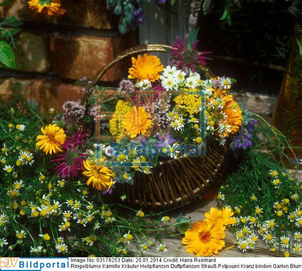 Design#5001630: Kräuter und duftpflanzen im garten ? 24 gestaltungsideen - 2015-04 .... Duftpflanzen Im Garten Blumen Krauter