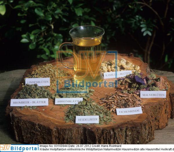 details zu 0003160944 kr uter heilpflanzen einheimische wildpflanzen naturmedizin hausmedizin. Black Bedroom Furniture Sets. Home Design Ideas