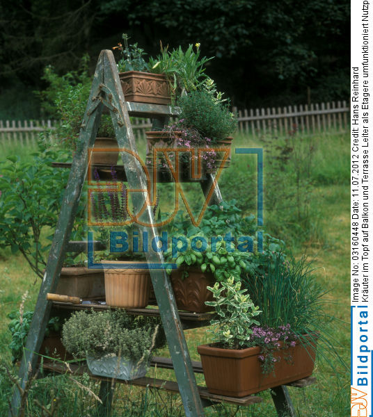 Kräuter Im Balkon_10:49:06 ~ Egenis.com : Inspirierend Garten ... Krauter Balkon Pflanzen