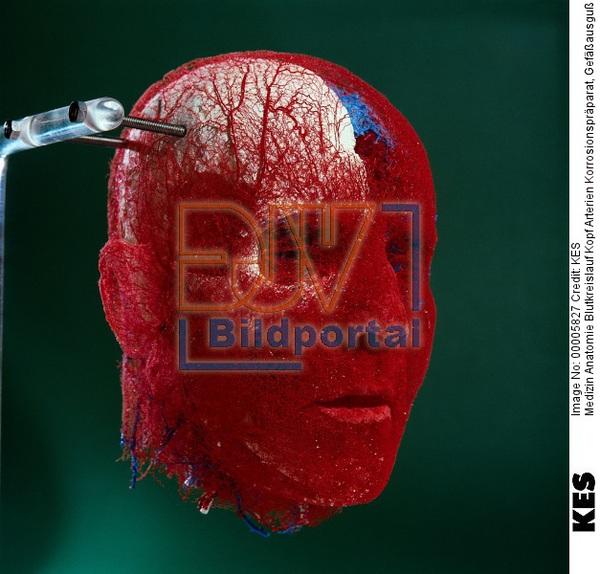 Details zu #0900005827 - Medizin Anatomie Blutkreislauf Kopf ...