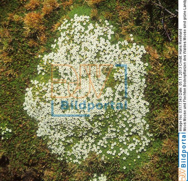 Details Zu 0003177343 Moos Moose Und Flechten Bodenpflanzen Des