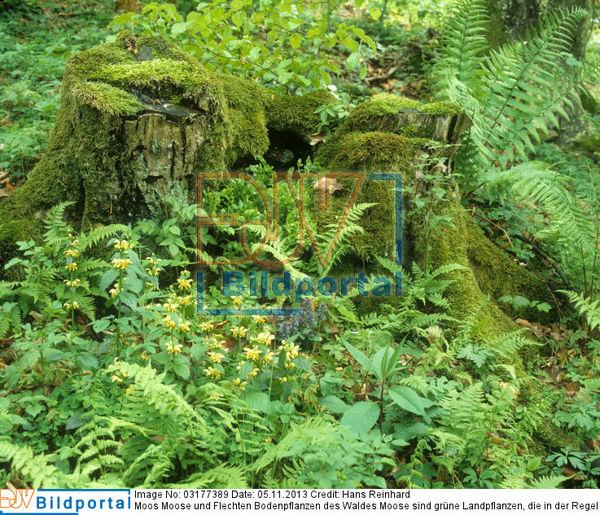 Details Zu 0003177389 Moos Moose Und Flechten Bodenpflanzen Des