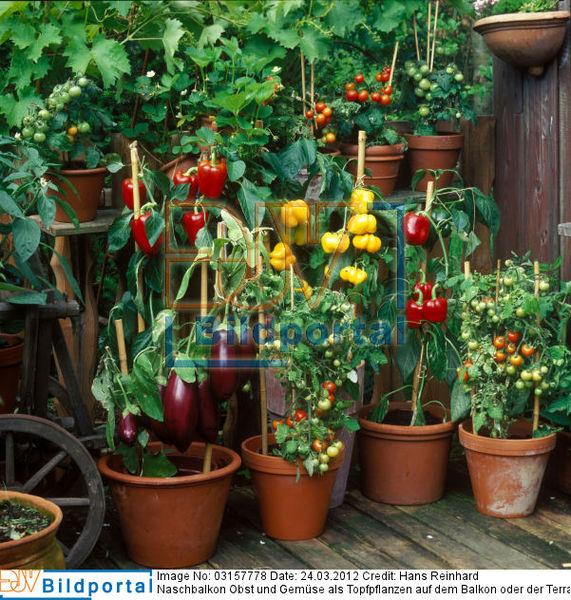 details zu 0003157778 naschbalkon obst und gem se als topfpflanzen auf dem balkon oder der. Black Bedroom Furniture Sets. Home Design Ideas