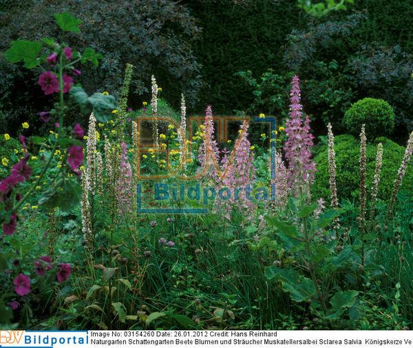 details zu 0003154260 naturgarten schattengarten beete. Black Bedroom Furniture Sets. Home Design Ideas