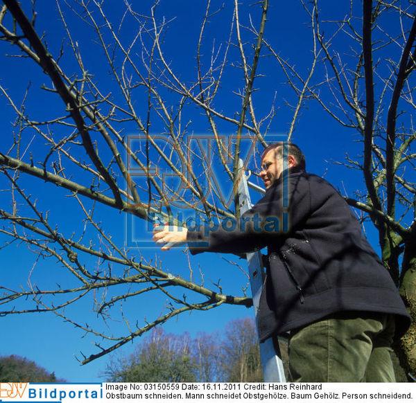 zeitpunkt obstbäume schneiden
