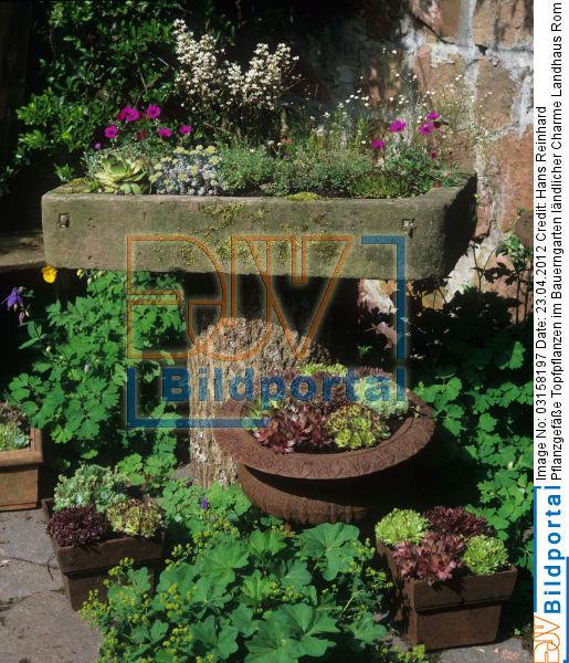 details zu 0003158197 pflanzgef e topfpflanzen im. Black Bedroom Furniture Sets. Home Design Ideas