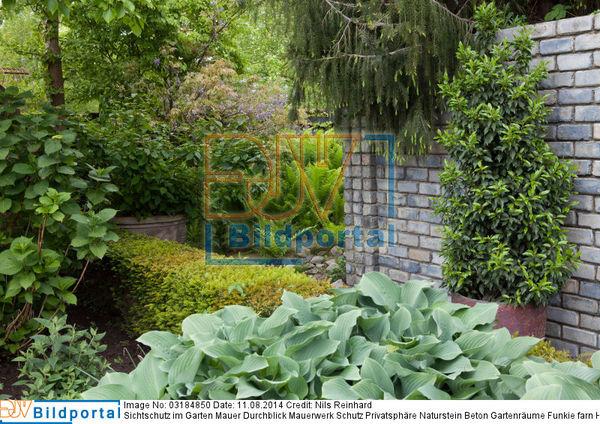 Details Zu 0003184850 Sichtschutz Im Garten Mauer Durchblick