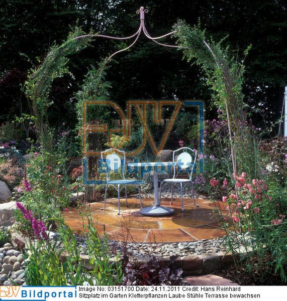 Details Zu 0003151700 Sitzplatz Im Garten Kletterpflanzen Laube