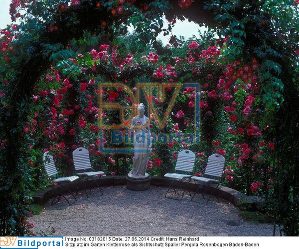 Details Zu 0003182015 Sitzplatz Im Garten Kletterrose Als