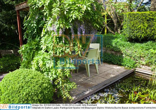 details zu 0003184168 sitzplatz im garten laube rankger st spalier mit blauregen glyzine. Black Bedroom Furniture Sets. Home Design Ideas