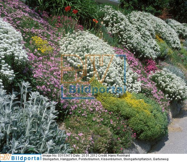 Details zu #0003153473 - Steingarten am Hang - DJV-Bildportal
