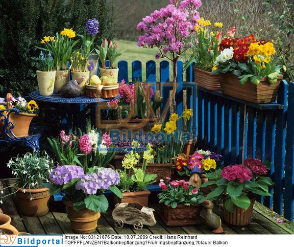 Details Zu 0003121676 Topfpflanzen Balkonbepflanzung