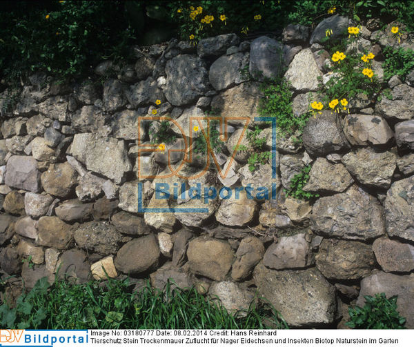 details zu 0003180777 tierschutz stein trockenmauer. Black Bedroom Furniture Sets. Home Design Ideas