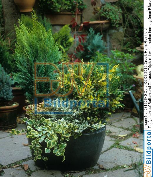 Details Zu 0003162640 Topfgarten Auf Balkon Und Terrasse Topfe