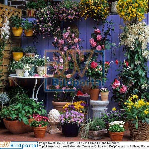 details zu 0003152278 topfpflanzen auf dem balkon der. Black Bedroom Furniture Sets. Home Design Ideas
