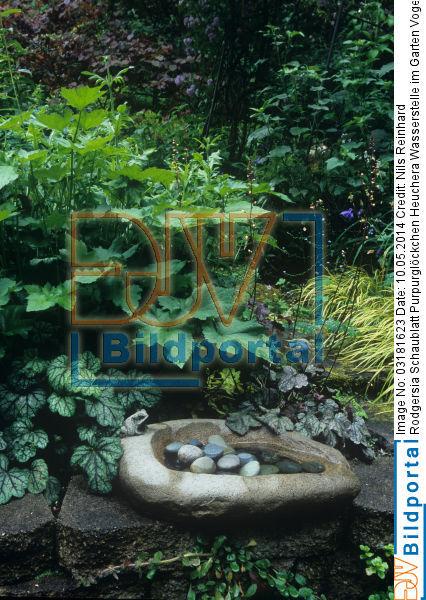 Details zu #0003181623 - Wasserstelle im Garten Vogeltränke ...