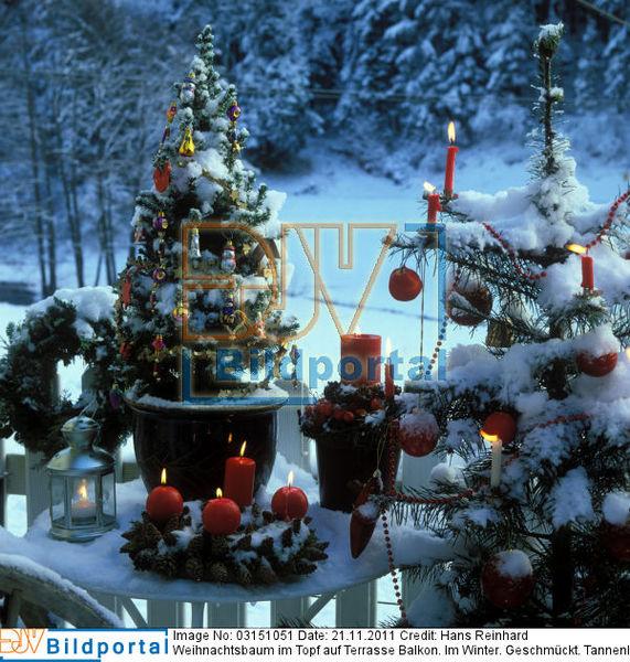 Weihnachtsbaum Im Topf Geschmückt.Details Zu 0003151051 Weihnachtsbaum Im Topf Auf Terrasse Balkon