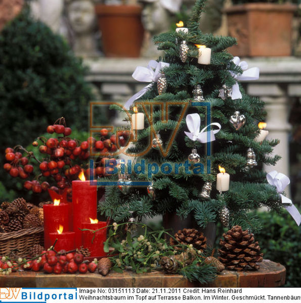 weihnachtsbaum terrasse my blog. Black Bedroom Furniture Sets. Home Design Ideas