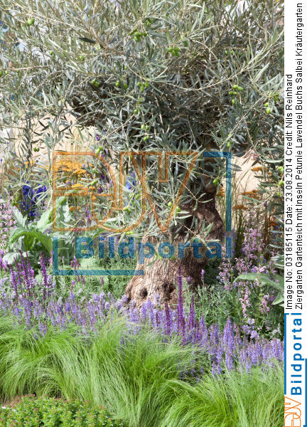details zu 0003185115 ziergarten gartenteich mit inseln petunie lavendel buchs salbei. Black Bedroom Furniture Sets. Home Design Ideas