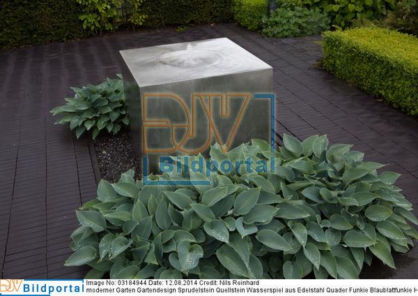 ... Gartendesign Sprudelstein Quellstein Wasserspiel Aus Edelstahl Quader  Funkie Blaublattfunkie Hosta Sieboldiana. Bild No. 0003184944